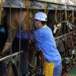 The Future of the Dairy Industry in Kansas