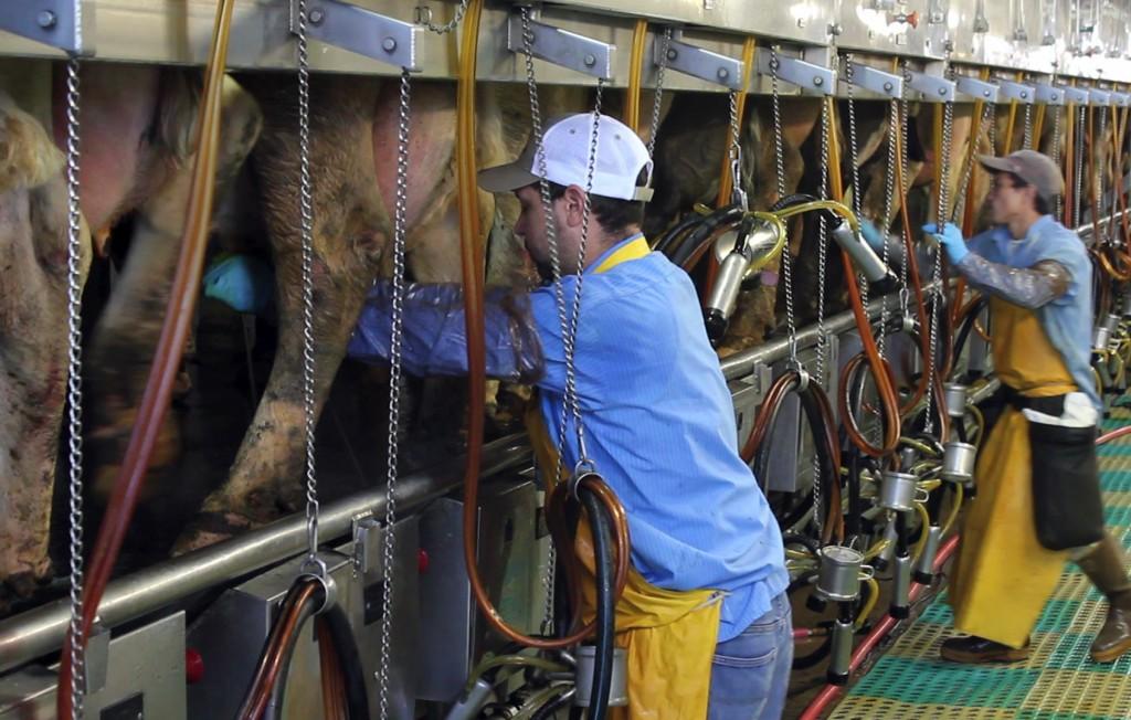Kansas Dairy
