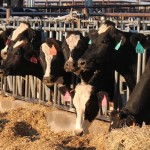 Dairy is a fast-growing industry in Kansas