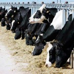 Dairy industry poised for growth