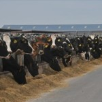 Southwest Kansas dairy farmers gather in Dodge City